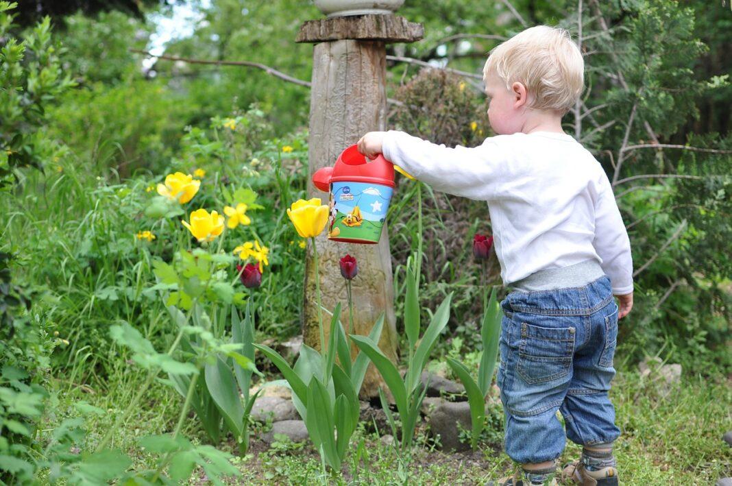 Сад и огород – привлекаем ребенка